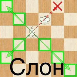 Слон шахматы